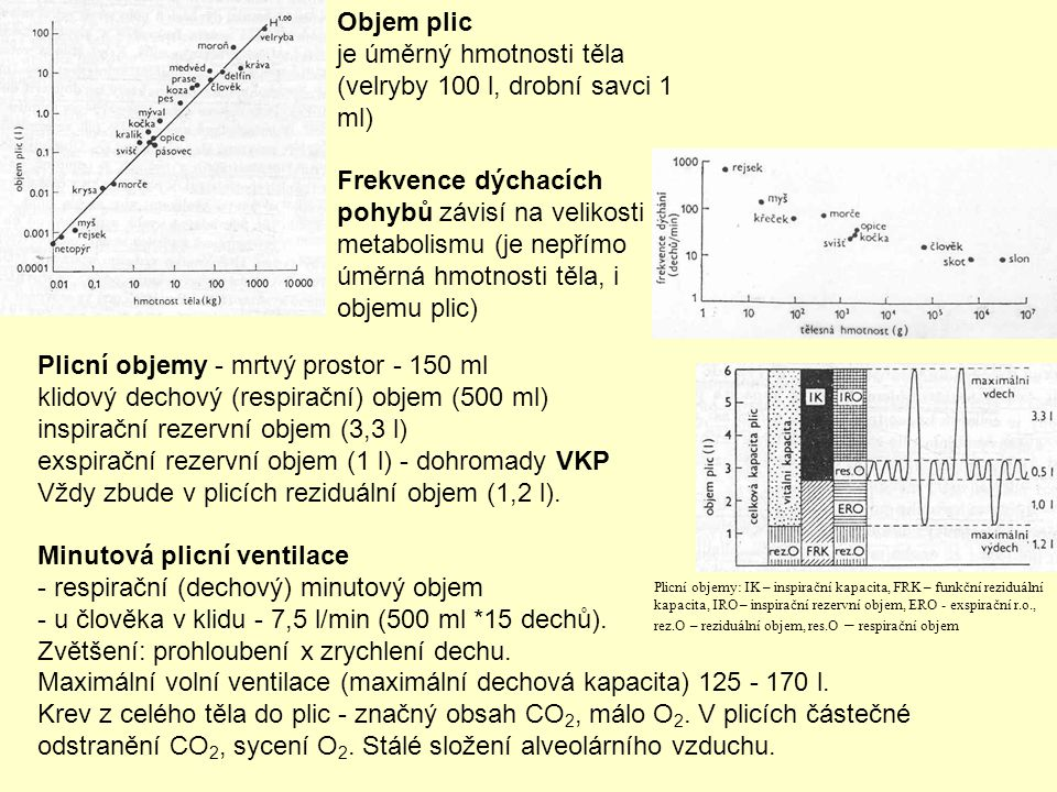 Objem plic je úměrný hmotnosti těla (velryby 100 l, drobní savci 1 ml) Frekvence dýchacích pohybů závisí na velikosti metabolismu (je nepřímo úměrná h