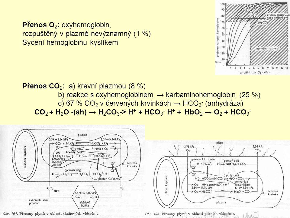 Přenos O 2 : oxyhemoglobin, rozpuštěný v plazmě nevýznamný (1 %) Sycení hemoglobinu kyslíkem Přenos CO 2 : a) krevní plazmou (8 %) b) reakce s oxyhemoglobinem → karbaminohemoglobin (25 %) c) 67 % CO 2 v červených krvinkách → HCO 3 - (anhydráza) CO 2 + H 2 O -(ah) → H 2 CO 3 -> H + + HCO 3 - H + + HbO 2 → O 2 + HCO 3 -