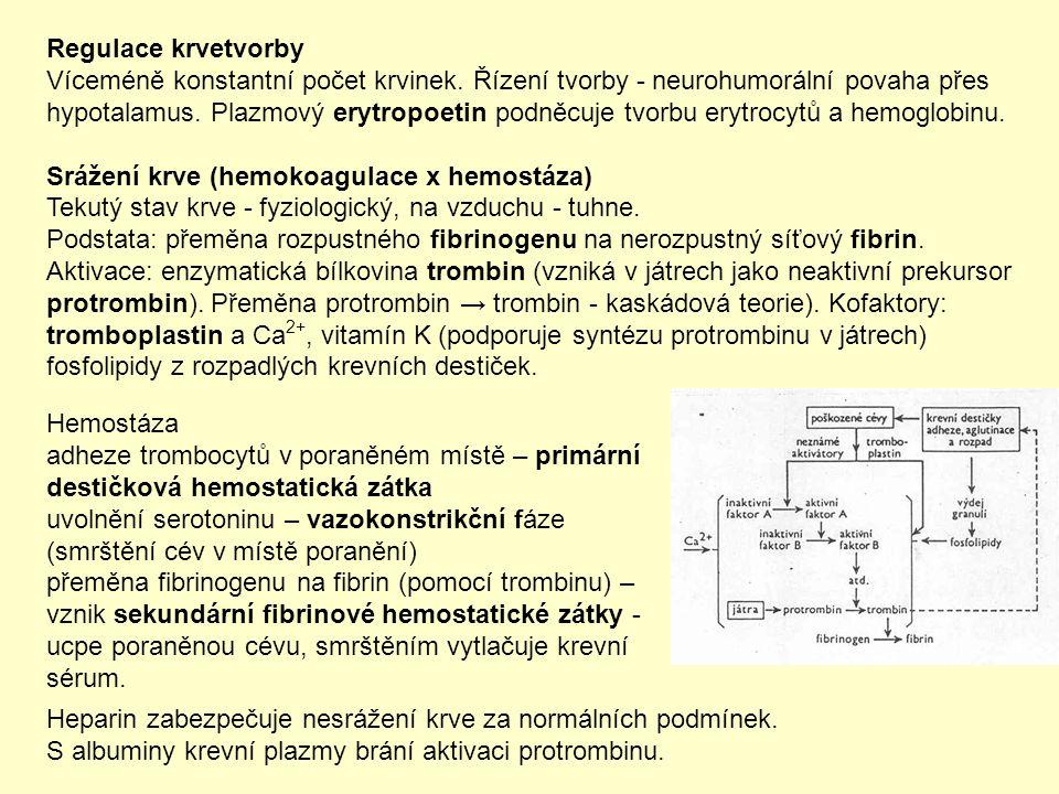 Hemostáza adheze trombocytů v poraněném místě – primární destičková hemostatická zátka uvolnění serotoninu – vazokonstrikční fáze (smrštění cév v míst