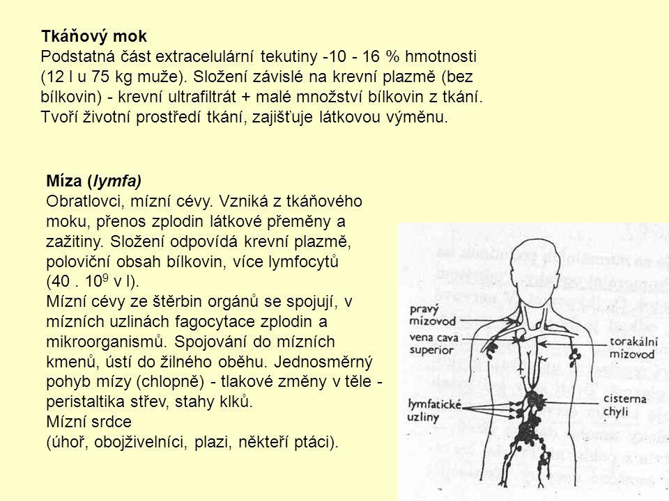 Tkáňový mok Podstatná část extracelulární tekutiny -10 - 16 % hmotnosti (12 l u 75 kg muže). Složení závislé na krevní plazmě (bez bílkovin) - krevní