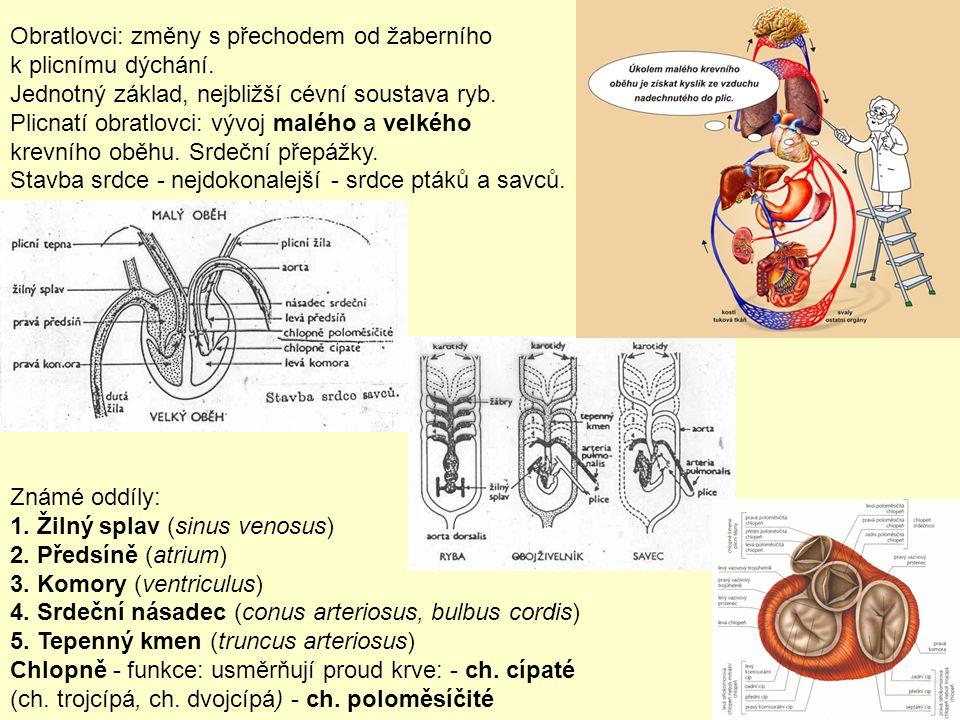 Obratlovci: změny s přechodem od žaberního k plicnímu dýchání.