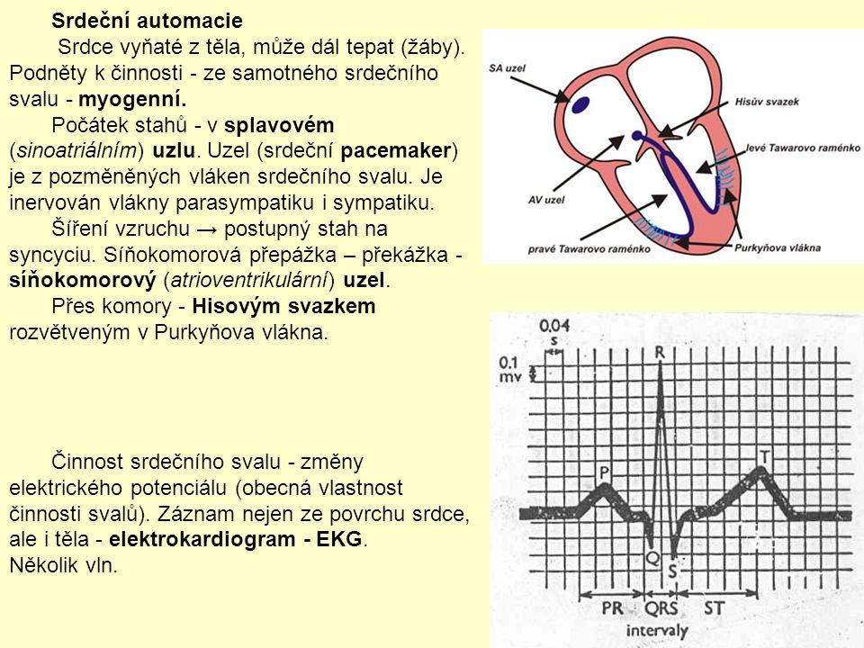 Srdeční automacie Srdce vyňaté z těla, může dál tepat (žáby). Podněty k činnosti - ze samotného srdečního svalu - myogenní. Počátek stahů - v splavové