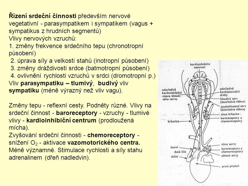 Řízení srdeční činnosti především nervové vegetativní - parasympatikem i sympatikem (vagus + sympatikus z hrudních segmentů) Vlivy nervových vzruchů: