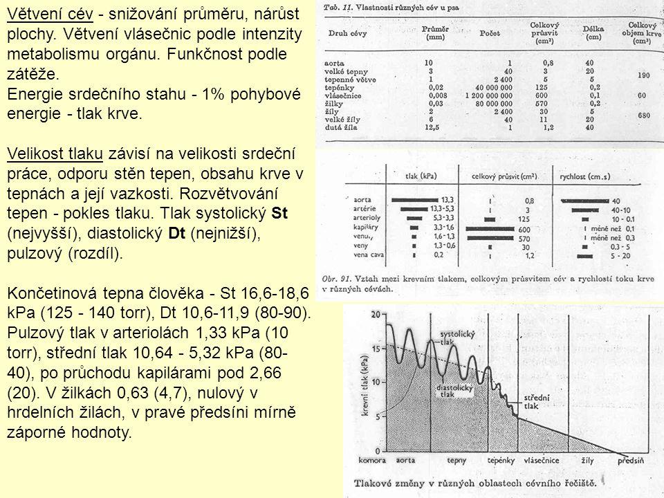 Větvení cév - snižování průměru, nárůst plochy. Větvení vlásečnic podle intenzity metabolismu orgánu. Funkčnost podle zátěže. Energie srdečního stahu