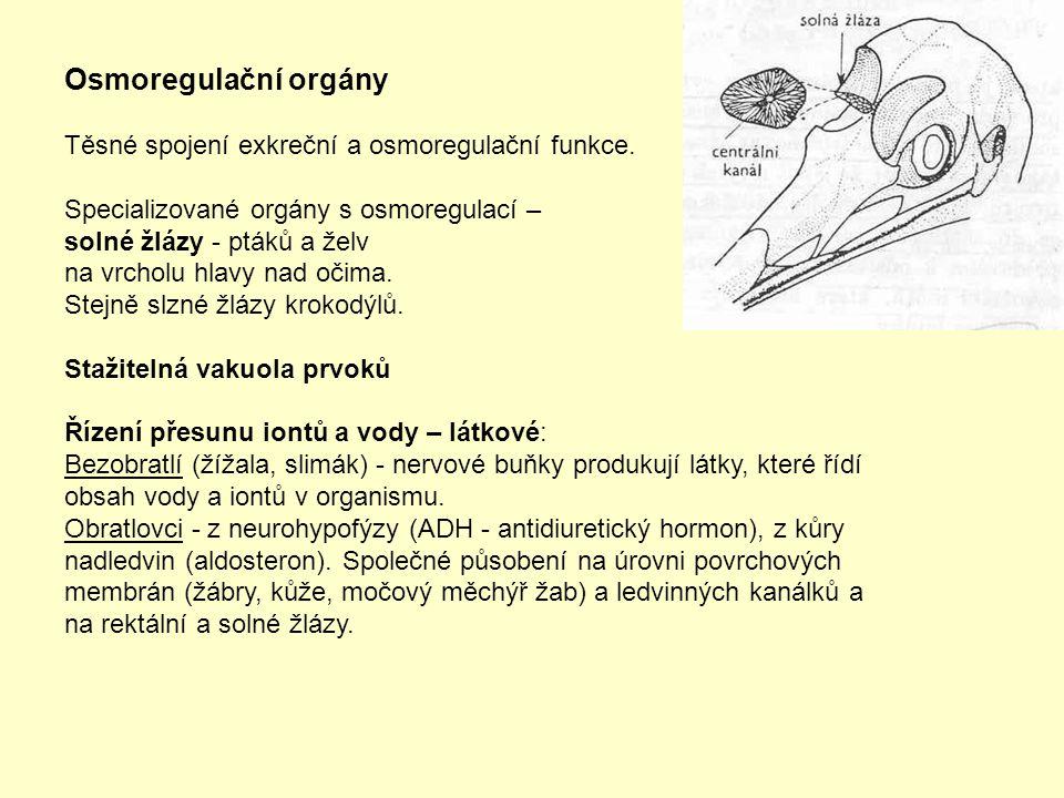 Osmoregulační orgány Těsné spojení exkreční a osmoregulační funkce. Specializované orgány s osmoregulací – solné žlázy - ptáků a želv na vrcholu hlavy