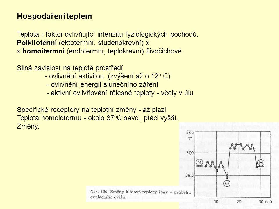 Hospodaření teplem Teplota - faktor ovlivňující intenzitu fyziologických pochodů. Poikilotermí (ektotermní, studenokrevní) x x homoitermní (endotermní
