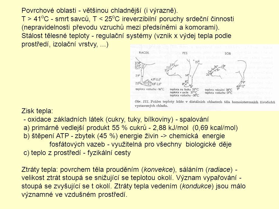 Povrchové oblasti - většinou chladnější (i výrazně). T > 41 o C - smrt savců, T < 25 o C ireverzibilní poruchy srdeční činnosti (nepravidelnosti převo