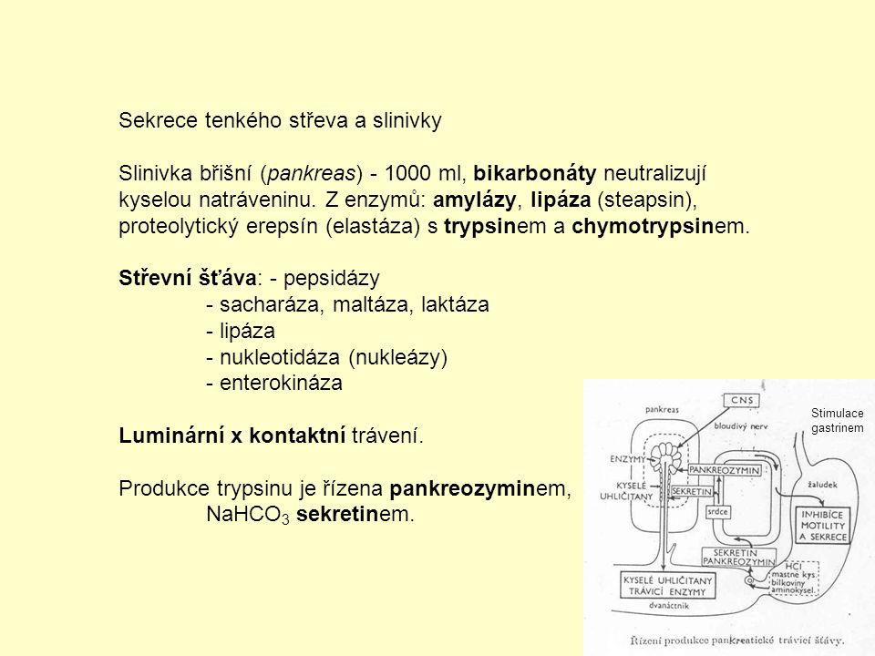 Játra - žluč jako emulgátor tuků - přetváření živin (vrátnicová žíla ze střeva) - řízení metabolismu sacharidů a tuků, ukládání glykogenu, tvorba ketonových látek - tvorba bílkovin krevní plazmy - močoviny (rozpad aminokyselin) - rozklad steroidních a bílkovinných hormonů - detoxikace škodlivých látek Denně 500 ml žluče pH 7,4-8,0 se žlučovými barvivy, solemi žlučových kyselin, lecitinem, cholesterolem Sekrece žluče trvalá se stimulací hepatokininem (ze sliznice dvanáctníku).