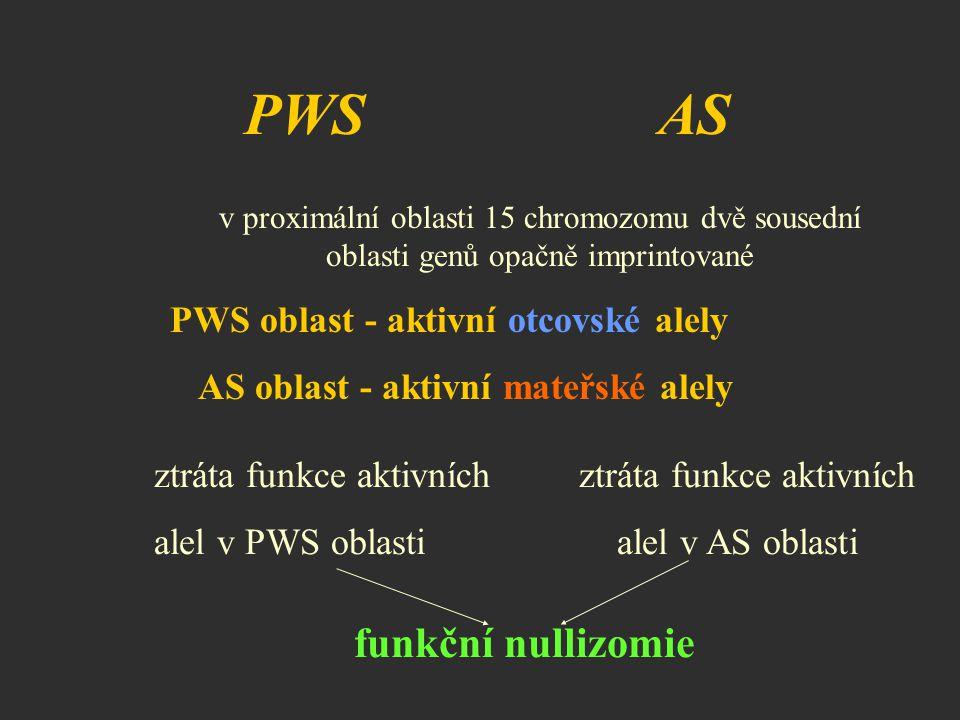 PWS AS ztráta funkce aktivních alel v PWS oblasti alel v AS oblasti funkční nullizomie v proximální oblasti 15 chromozomu dvě sousední oblasti genů op