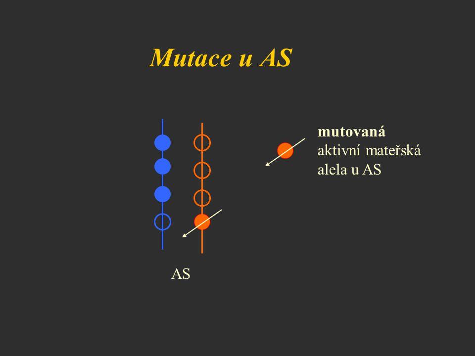 Mutace u AS AS mutovaná aktivní mateřská alela u AS
