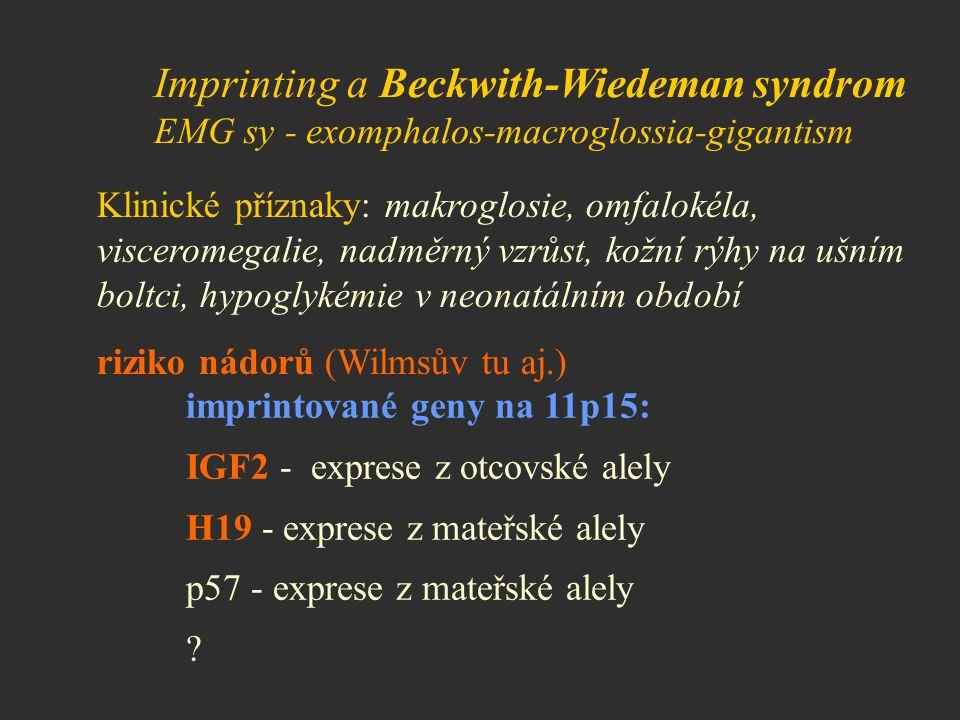 Imprinting a Beckwith-Wiedeman syndrom EMG sy - exomphalos-macroglossia-gigantism Klinické příznaky: makroglosie, omfalokéla, visceromegalie, nadměrný