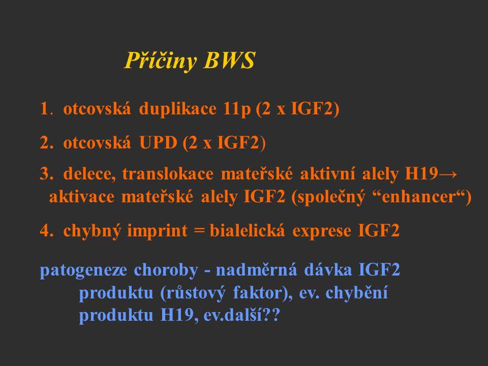 Příčiny BWS 1. otcovská duplikace 11p (2 x IGF2) 2. otcovská UPD (2 x IGF2) 3. delece, translokace mateřské aktivní alely H19→ aktivace mateřské alely