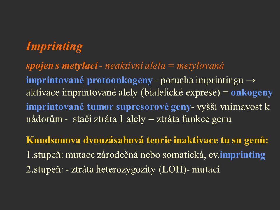 Imprinting spojen s metylací - neaktivní alela = metylovaná imprintované protoonkogeny - porucha imprintingu → aktivace imprintované alely (bialelické