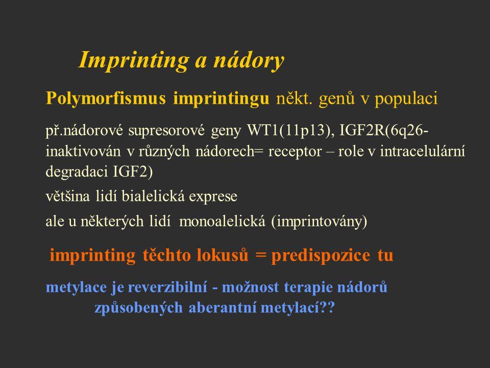 Imprinting a nádory Polymorfismus imprintingu někt. genů v populaci př.nádorové supresorové geny WT1(11p13), IGF2R(6q26- inaktivován v různých nádorec