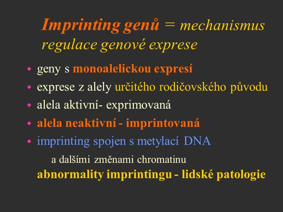 Imprinting genů = mechanismus regulace genové exprese w geny s monoalelickou expresí w exprese z alely určitého rodičovského původu w alela aktivní- e
