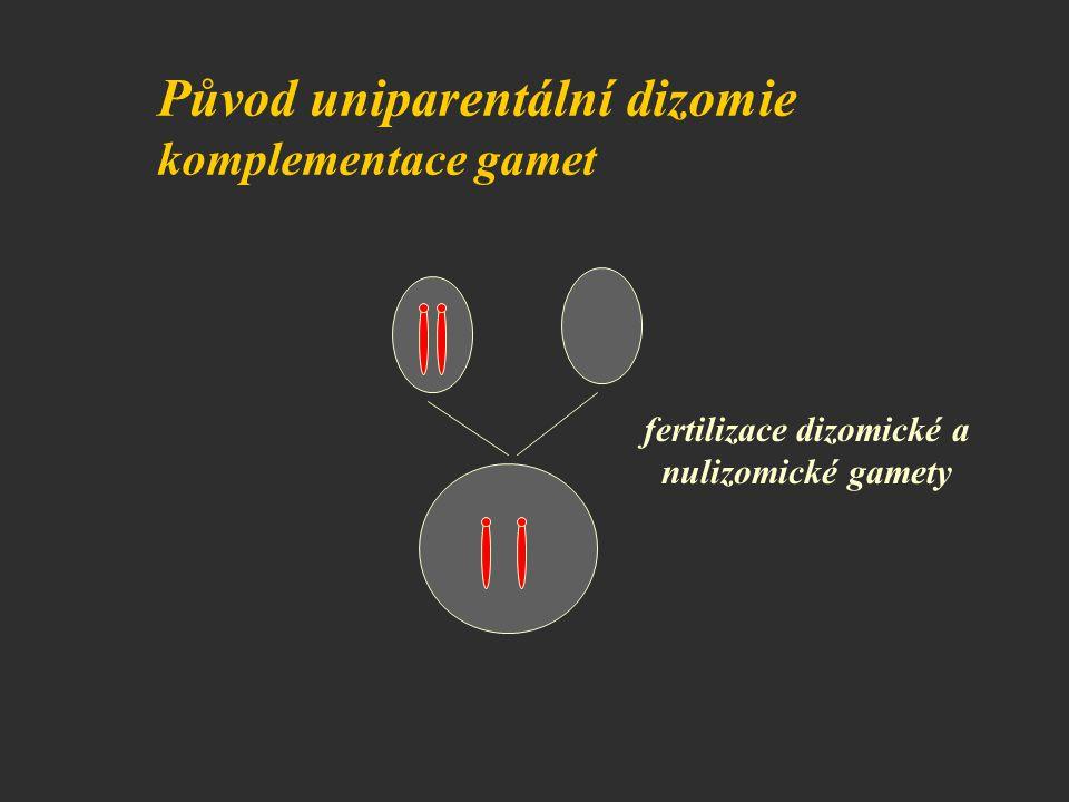 fertilizace dizomické a nulizomické gamety Původ uniparentální dizomie komplementace gamet