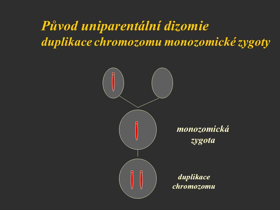 Původ uniparentální dizomie duplikace chromozomu monozomické zygoty monozomická zygota duplikace chromozomu