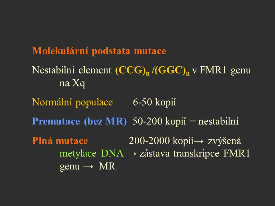 Molekulární podstata mutace Nestabilní element (CCG) n /(GGC) n v FMR1 genu na Xq Normální populace 6-50 kopií Premutace (bez MR) 50-200 kopií = nesta