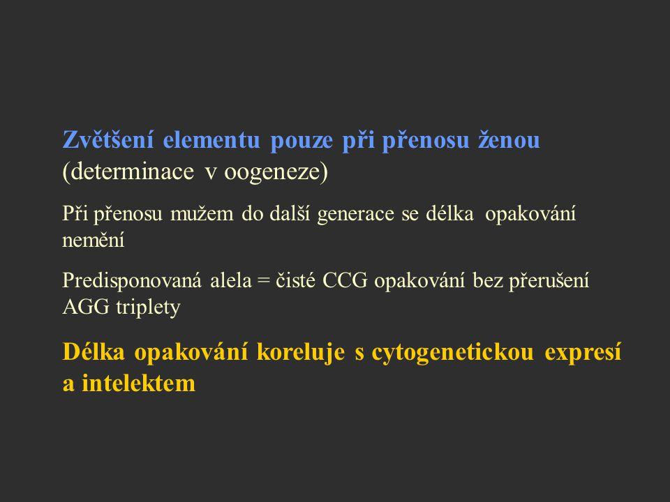 Zvětšení elementu pouze při přenosu ženou (determinace v oogeneze) Při přenosu mužem do další generace se délka opakování nemění Predisponovaná alela
