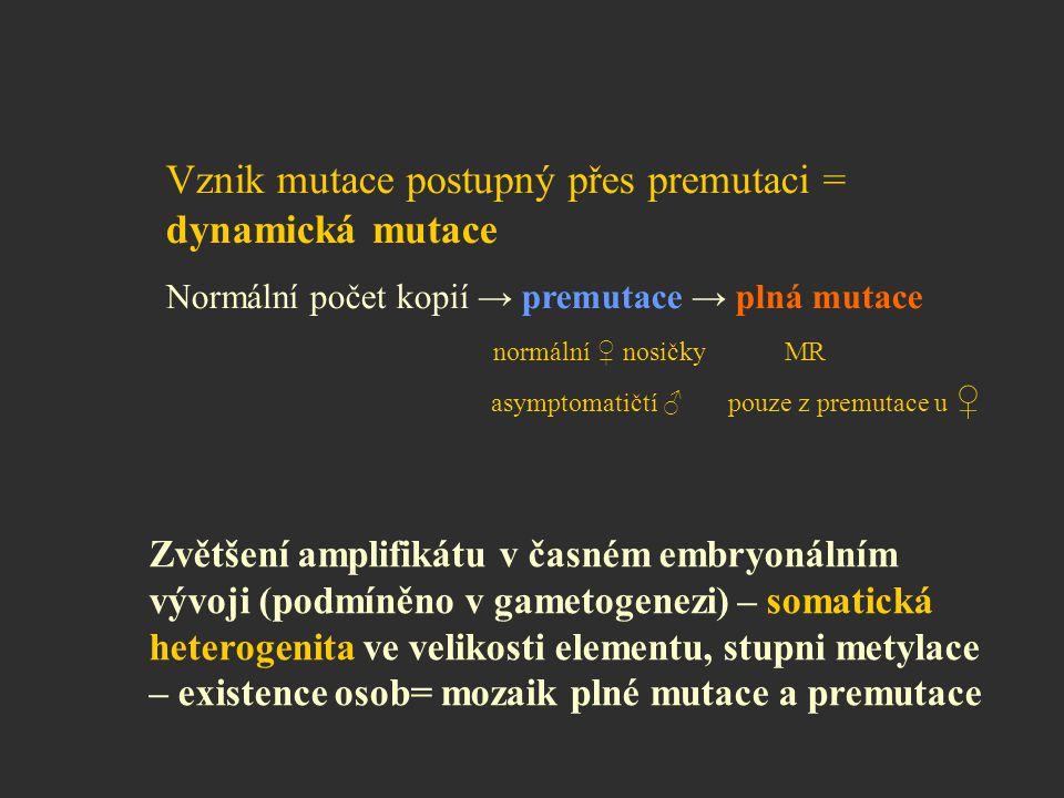 Vznik mutace postupný přes premutaci = dynamická mutace Normální počet kopií → premutace → plná mutace normální ♀ nosičky MR asymptomatičtí ♂ pouze z