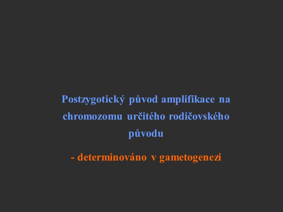 Postzygotický původ amplifikace na chromozomu určitého rodičovského původu - determinováno v gametogenezi