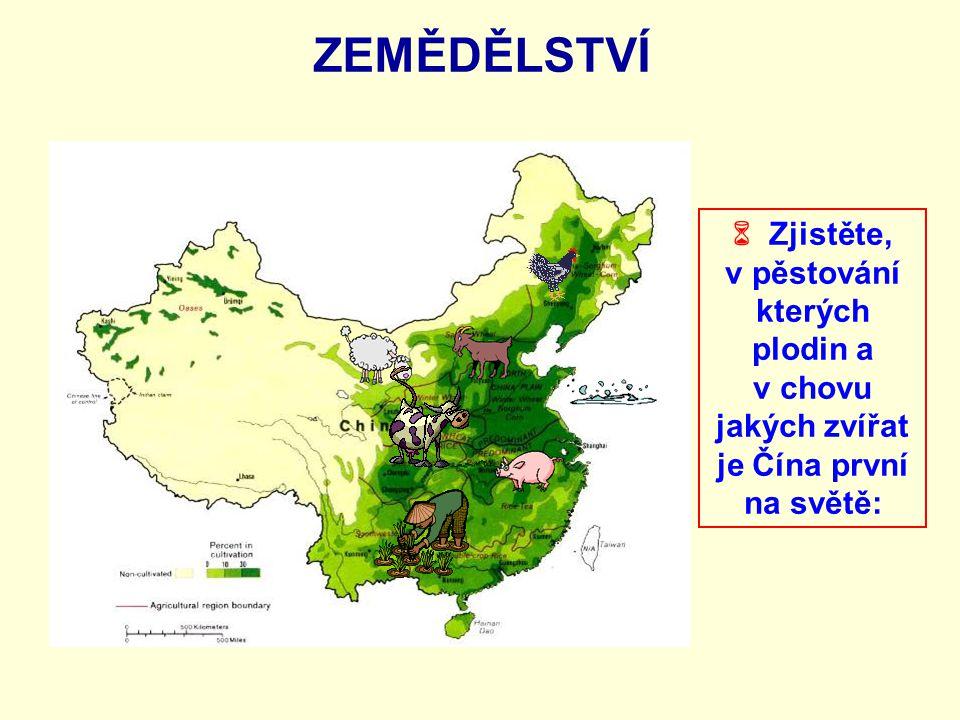 ZEMĚDĚLSTVÍ  Zjistěte, v pěstování kterých plodin a v chovu jakých zvířat je Čína první na světě: