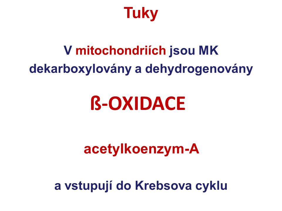 Tuky V mitochondriích jsou MK dekarboxylovány a dehydrogenovány acetylkoenzym-A a vstupují do Krebsova cyklu ß-OXIDACE