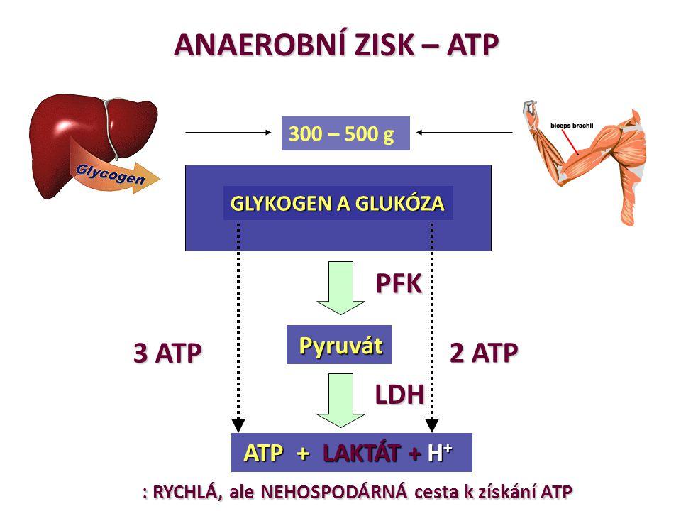 ANAEROBNÍ ZISK – ATP GLYKOGEN A GLUKÓZA ATP + LAKTÁT + H + ATP + LAKTÁT + H + 300 – 500 g Pyruvát Pyruvát 3 ATP 2 ATP : RYCHLÁ, ale NEHOSPODÁRNÁ cesta