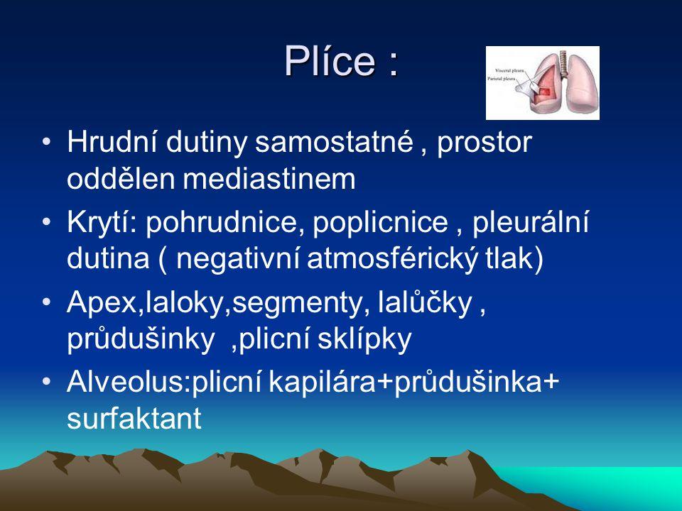 Plíce : Hrudní dutiny samostatné, prostor oddělen mediastinem Krytí: pohrudnice, poplicnice, pleurální dutina ( negativní atmosférický tlak) Apex,lalo