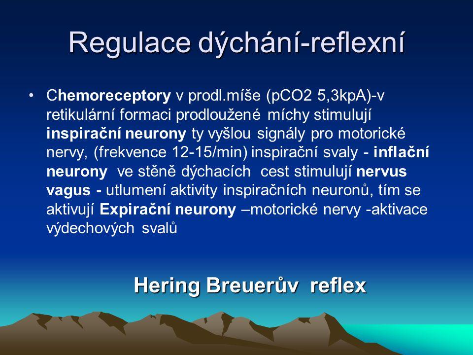 Regulace dýchání-reflexní Chemoreceptory v prodl.míše (pCO2 5,3kpA)-v retikulární formaci prodloužené míchy stimulují inspirační neurony ty vyšlou sig