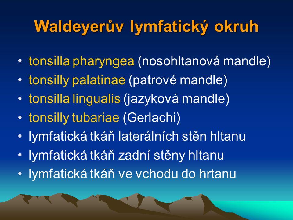 Waldeyerův lymfatický okruh tonsilla pharyngea (nosohltanová mandle) tonsilly palatinae (patrové mandle) tonsilla lingualis (jazyková mandle) tonsilly