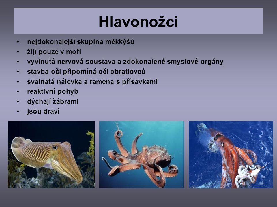 nejdokonalejší skupina měkkýšů žijí pouze v moři vyvinutá nervová soustava a zdokonalené smyslové orgány stavba oči připomíná oči obratlovců svalnatá