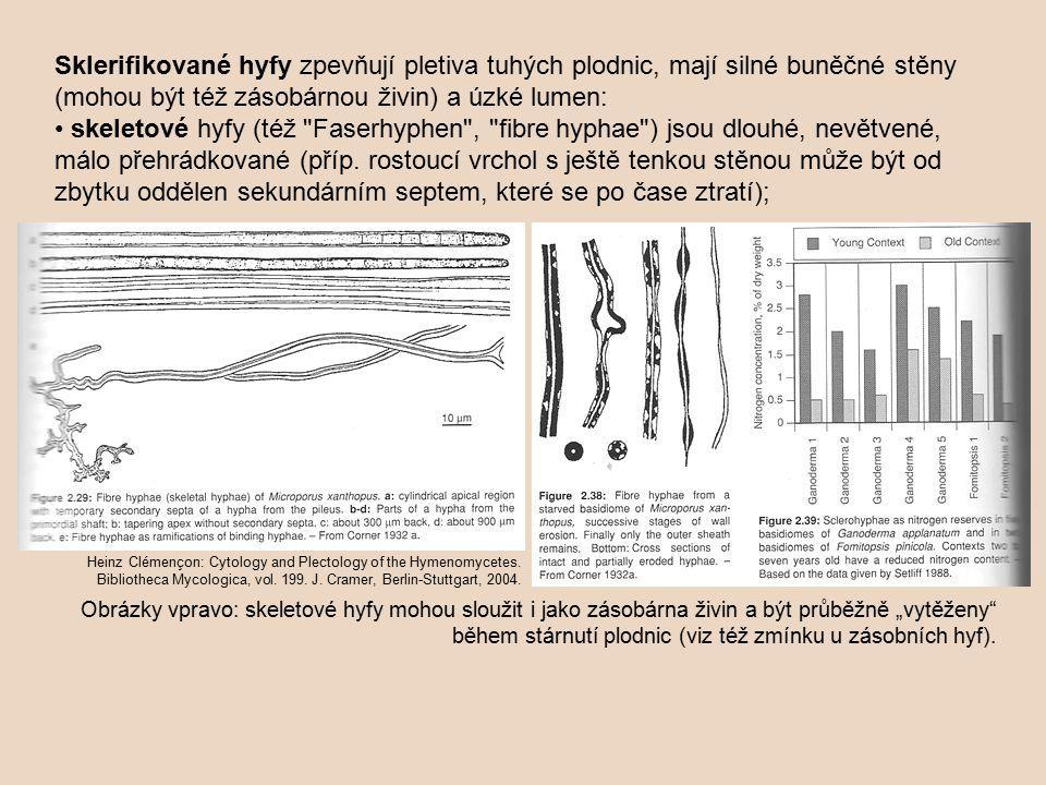 Sklerifikované hyfy zpevňují pletiva tuhých plodnic, mají silné buněčné stěny (mohou být též zásobárnou živin) a úzké lumen: skeletové hyfy (též Faserhyphen , fibre hyphae ) jsou dlouhé, nevětvené, málo přehrádkované (příp.
