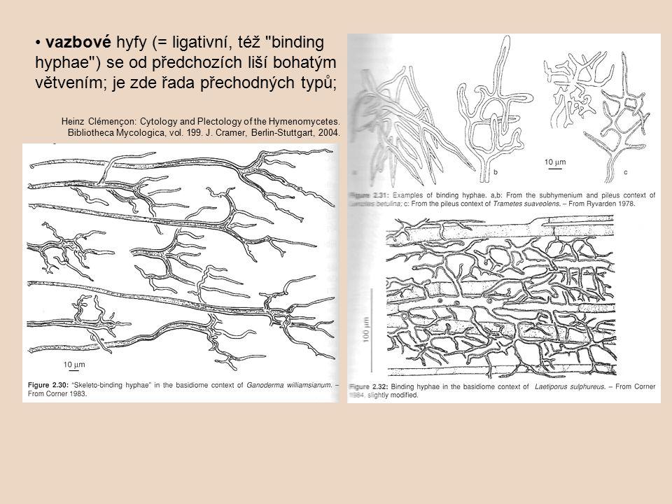 vazbové hyfy (= ligativní, též binding hyphae ) se od předchozích liší bohatým větvením; je zde řada přechodných typů; Heinz Clémençon: Cytology and Plectology of the Hymenomycetes.