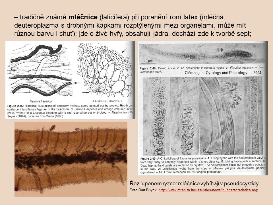– tradičně známé mléčnice (laticifera) při poranění roní latex (mléčná deuteroplazma s drobnými kapkami rozptýlenými mezi organelami, může mít různou