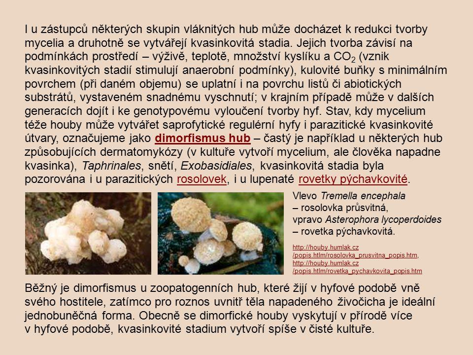 I u zástupců některých skupin vláknitých hub může docházet k redukci tvorby mycelia a druhotně se vytvářejí kvasinkovitá stadia. Jejich tvorba závisí