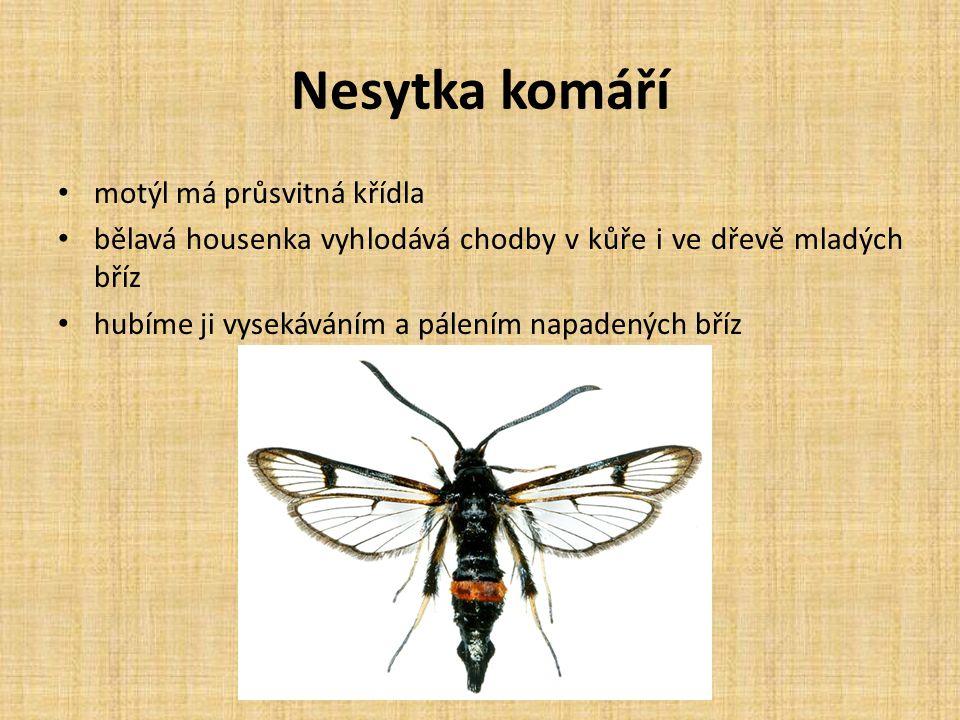 Nesytka komáří motýl má průsvitná křídla bělavá housenka vyhlodává chodby v kůře i ve dřevě mladých bříz hubíme ji vysekáváním a pálením napadených bř