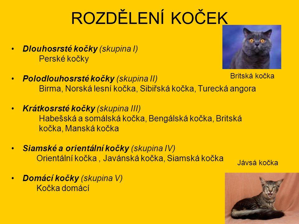 ROZDĚLENÍ KOČEK Dlouhosrsté kočky (skupina I) Perské kočky Polodlouhosrsté kočky (skupina II) Birma, Norská lesní kočka, Sibiřská kočka, Turecká angor
