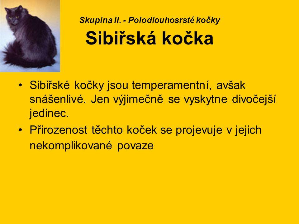 Skupina II. - Polodlouhosrsté kočky Sibiřská kočka Sibiřské kočky jsou temperamentní, avšak snášenlivé. Jen výjimečně se vyskytne divočejší jedinec. P