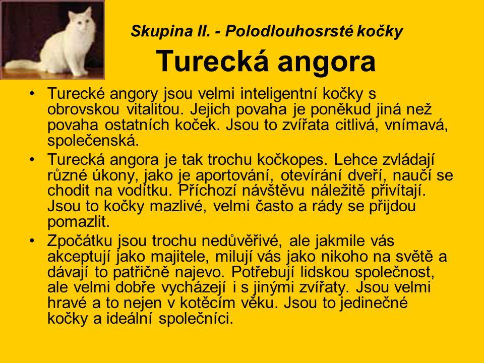 Skupina II. - Polodlouhosrsté kočky Turecká angora Turecké angory jsou velmi inteligentní kočky s obrovskou vitalitou. Jejich povaha je poněkud jiná n