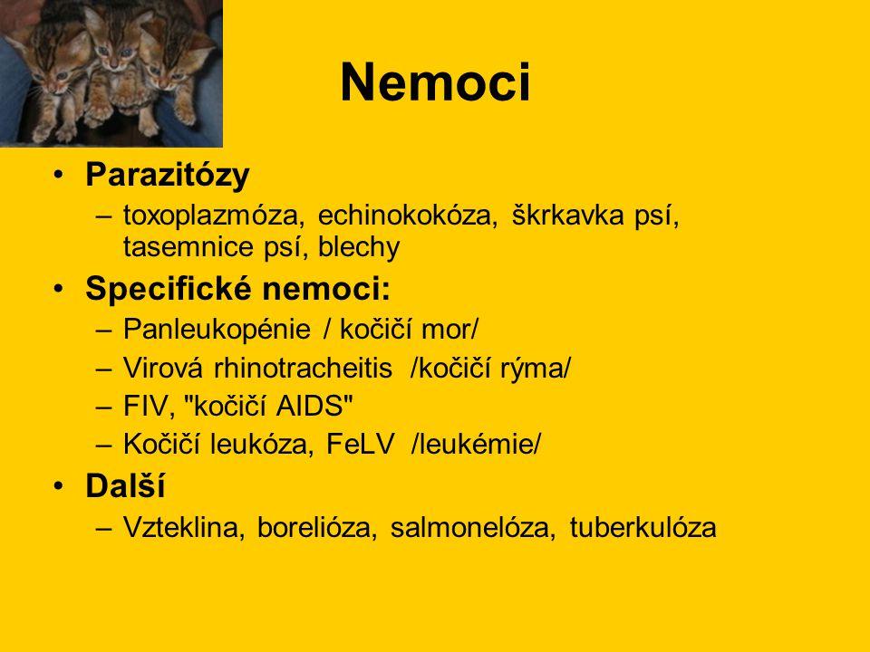 Nemoci Parazitózy –toxoplazmóza, echinokokóza, škrkavka psí, tasemnice psí, blechy Specifické nemoci: –Panleukopénie / kočičí mor/ –Virová rhinotrache