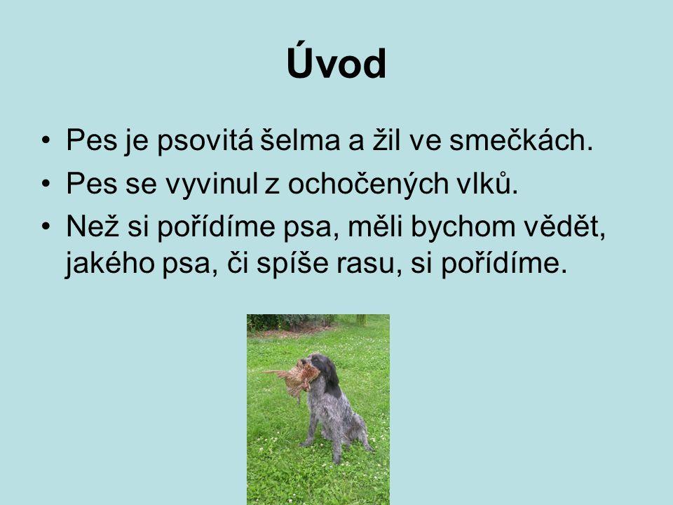 Úvod Pes je psovitá šelma a žil ve smečkách. Pes se vyvinul z ochočených vlků. Než si pořídíme psa, měli bychom vědět, jakého psa, či spíše rasu, si p