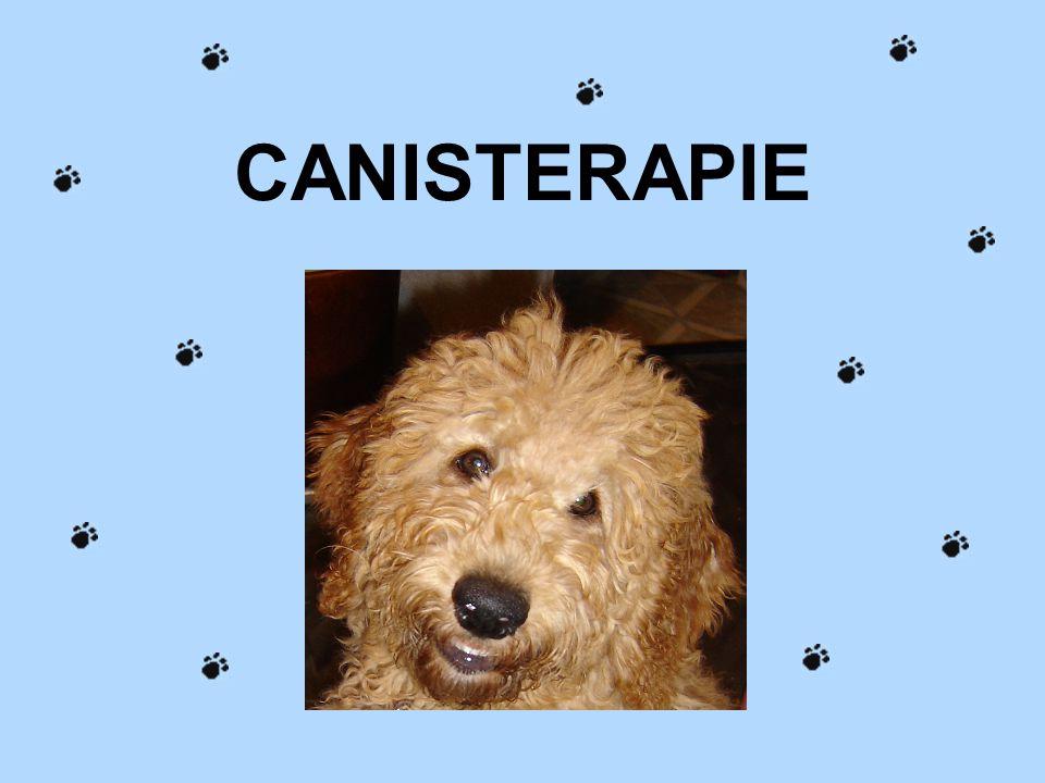 Fotky s tímto labradorem pocházejí ze semináře o canisterapii u Podaných rukou
