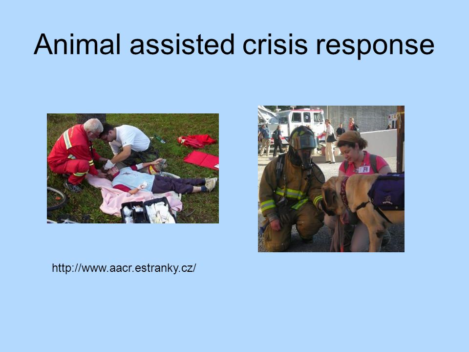 Animal assisted crisis response http://www.aacr.estranky.cz/