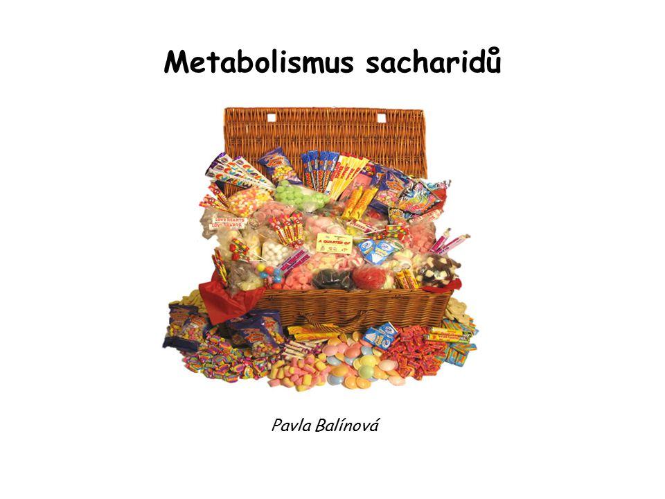 Metabolismus sacharidů Pavla Balínová