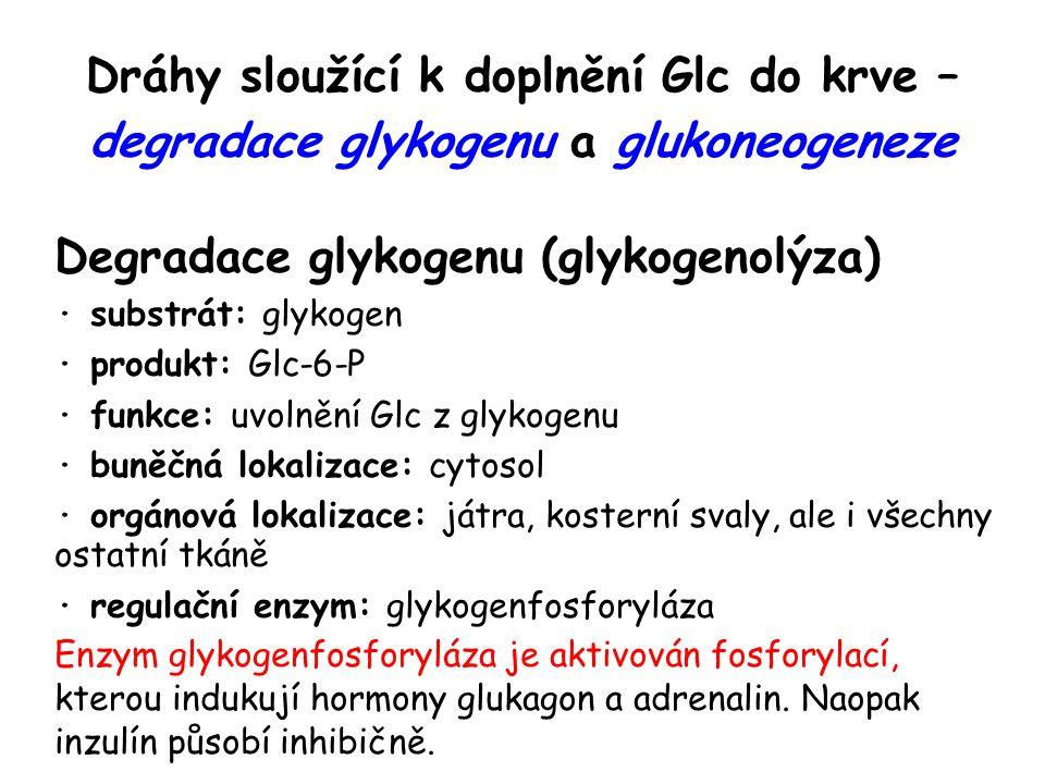 Dráhy sloužící k doplnění Glc do krve – degradace glykogenu a glukoneogeneze Degradace glykogenu (glykogenolýza) · substrát: glykogen · produkt: Glc-6-P · funkce: uvolnění Glc z glykogenu · buněčná lokalizace: cytosol · orgánová lokalizace: játra, kosterní svaly, ale i všechny ostatní tkáně · regulační enzym: glykogenfosforyláza Enzym glykogenfosforyláza je aktivován fosforylací, kterou indukují hormony glukagon a adrenalin.