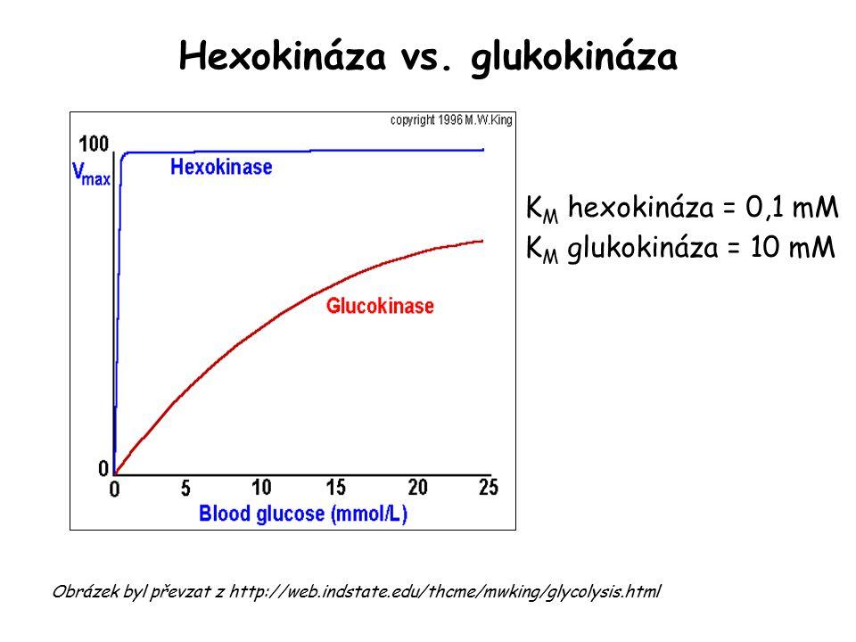 Hexokináza vs.