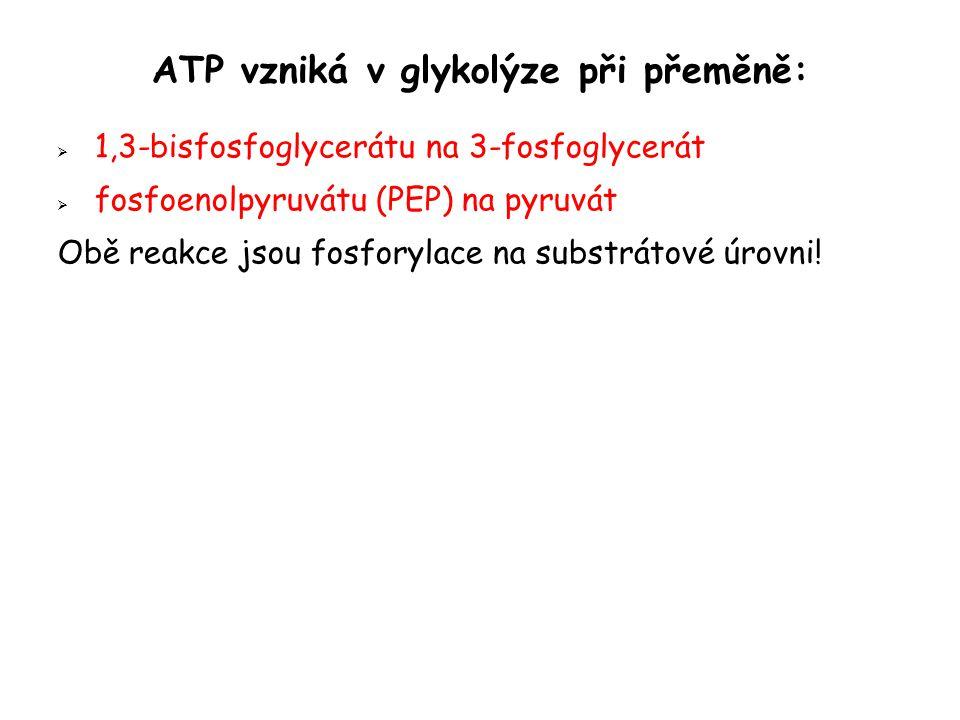 ATP vzniká v glykolýze při přeměně:  1,3-bisfosfoglycerátu na 3-fosfoglycerát  fosfoenolpyruvátu (PEP) na pyruvát Obě reakce jsou fosforylace na substrátové úrovni!