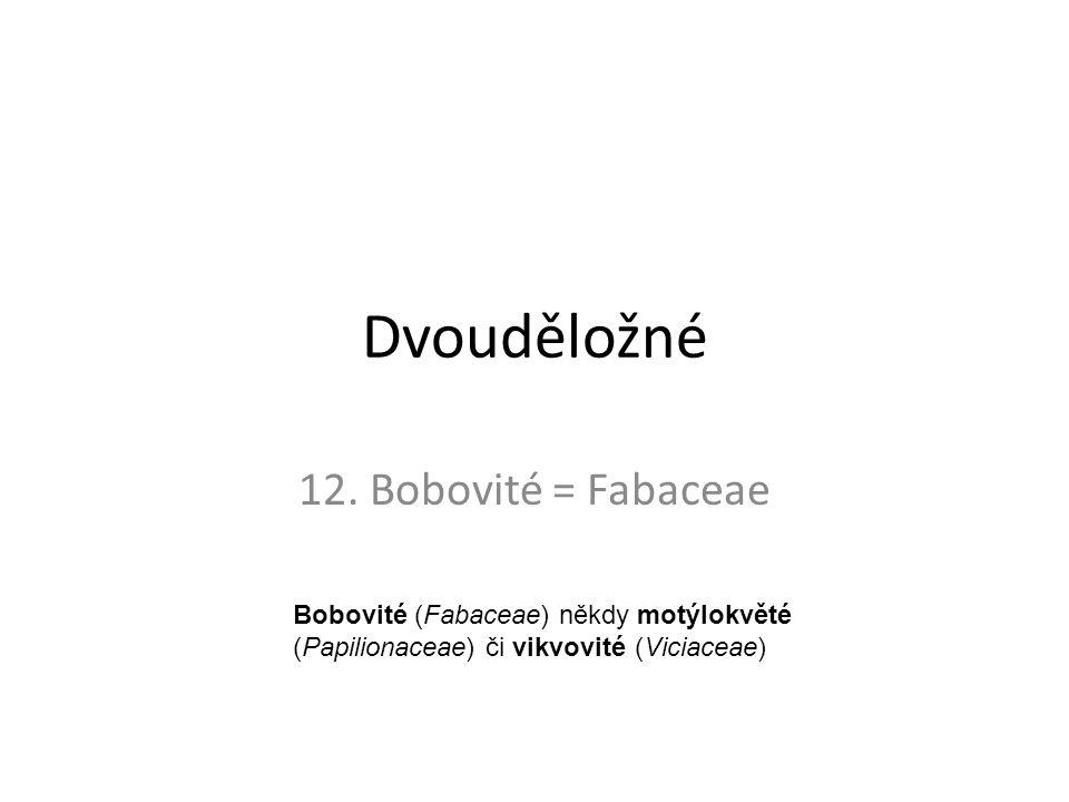 Dvouděložné 12. Bobovité = Fabaceae Bobovité (Fabaceae) někdy motýlokvěté (Papilionaceae) či vikvovité (Viciaceae)