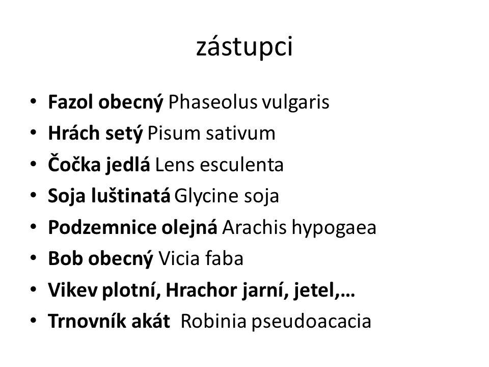 zástupci Fazol obecný Phaseolus vulgaris Hrách setý Pisum sativum Čočka jedlá Lens esculenta Soja luštinatá Glycine soja Podzemnice olejná Arachis hyp